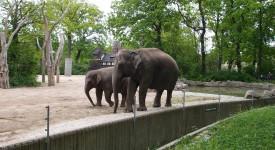 Berlijn Tiergarten Zoo olifanten