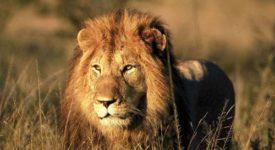 rondreis-zuid_afrika-_-classic-south-africa
