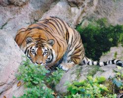 Bioparco di Roma dierentuin bezienswaardigheden Rome